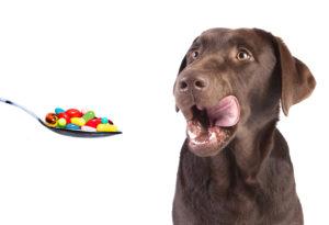 Desparasitación mascotas