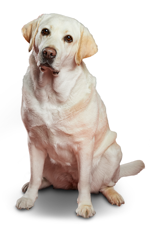 Kila te recomienda el seguro para mascotas