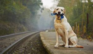 ¿Has perdido a tu perro?