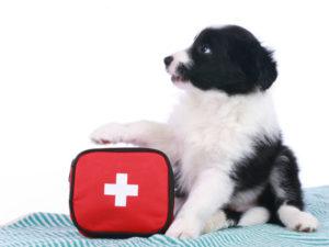 Primeros auxilios del perro