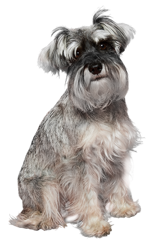 Valentina te aconseja el seguro de mascotas