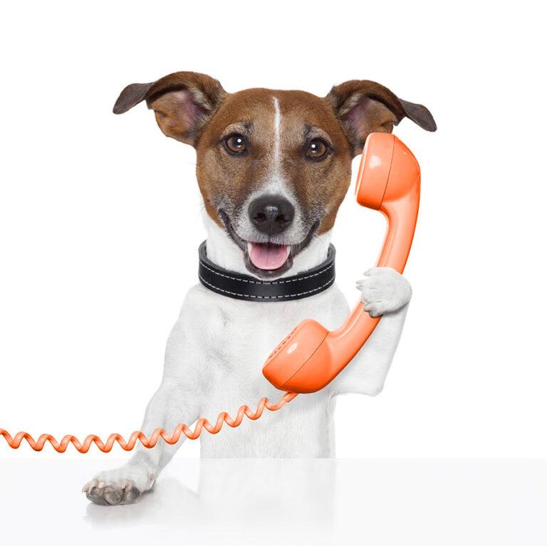 Contacto seguro para mascotas